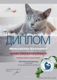Vebinar-09-19-57-koshki-34-Melnikova-Ekaterina